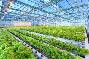 Aandrijftechnieken tuinbouw en agrarisch